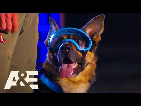 Rony the Goggle-Wearing K9 WINS Competition | America's Top Dog (Season 1) | A&E