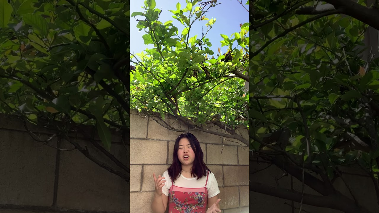 Bridgette Yang, 19, LA / FINALIST