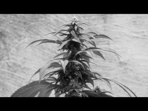 Filme – É só uma planta