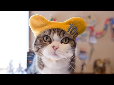 Maru the Cat Turned 10YearsOld Today