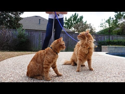 TAKING MY CATS FOR A WALK!!