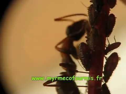 Comment traiter les arbres fruitiers contre les fourmis la r ponse est sur - Quand traiter les arbres fruitiers ...