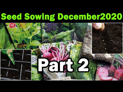 Seed to sow in December | Vegetable seeds for December | Veg seeds to sow now in the garden | Part 2
