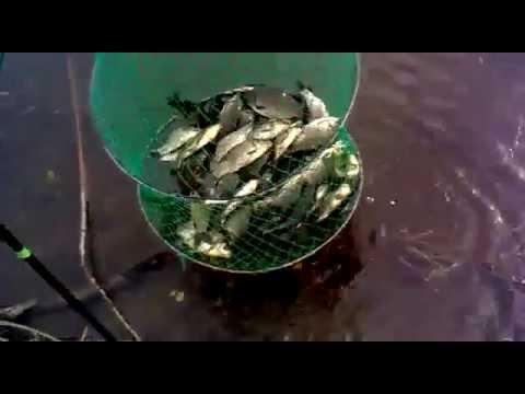 рыбалка в лопатино тольятти видео