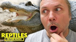 GIANT 17 FOOT ALLIGATOR FOUND!!! REPTILES IN THE NEWS by AnimalBytesTV
