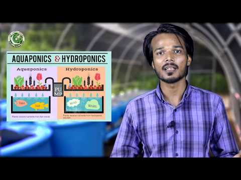 What is Aquaponics System? Difference Between Hydroponics and Aquaponics (Urdu with English sub)