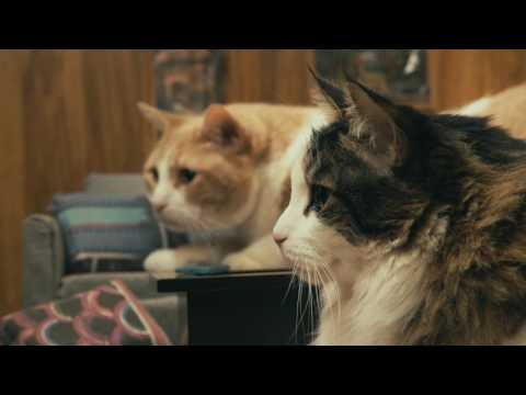 IAMS® Presents: Indoor Cats Staying In (видео)