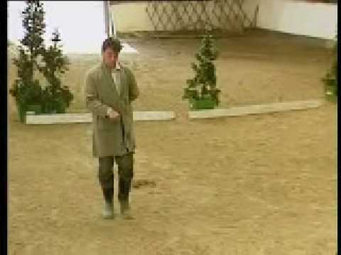 Absolutely - Dressage (Without the Horses)
