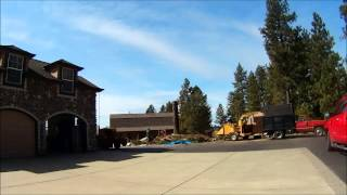 Pine Tree Removal in Colbert Wa