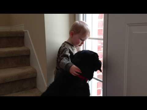 guardate come questo bimbo consola il suo cane triste!