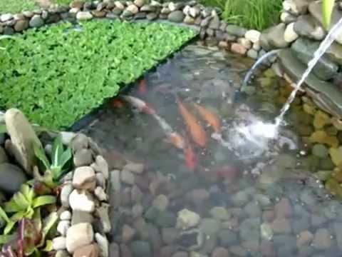 Como hacer estanques artificiales videos videos for Estanques artificiales construccion