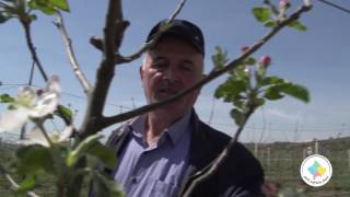 Keshilla Bujqesore - Pemishte me molle
