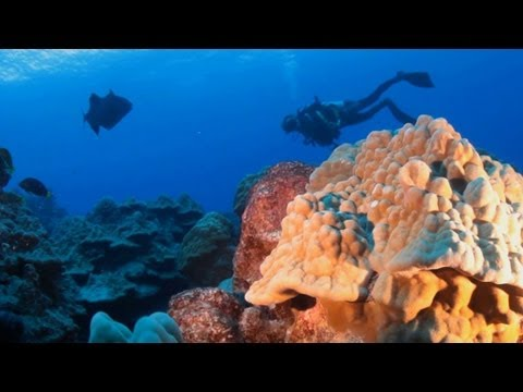 scuba diving - For more videos on the Cook Islands visit our website http://www.funtraveltv.com/#!cook-islands-south-pacific/ccna For Accommodation on the Cook Islands http...