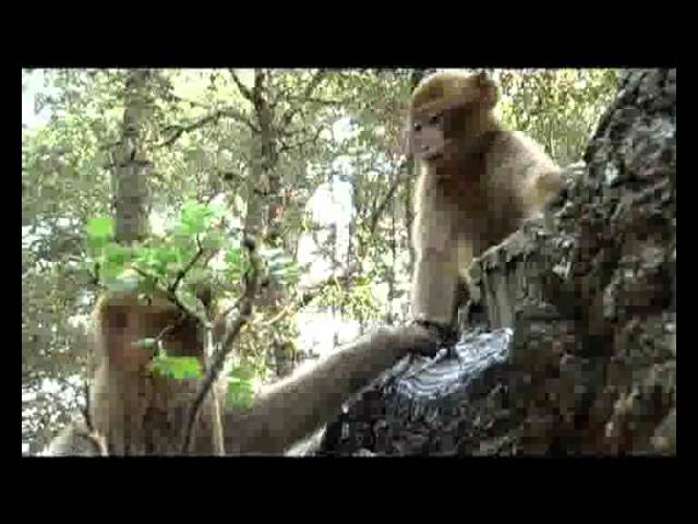 Le Sage des Forêts (2007)