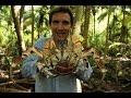 Download Lagu British Indian Ocean Territory – coconut crabs Mp3 Free
