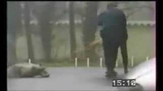 Treinamento de pastor belga malinois pela polícia Francesa