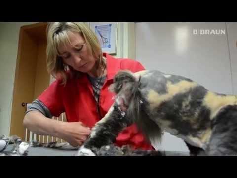 AESCULAP®  Schermaschinen im Test: Katzenschur ( verfilztes Fell )