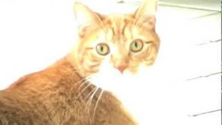 Ещё один Dramatic Cat