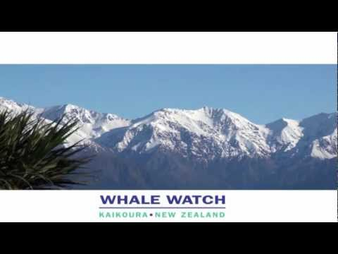 Kaikoura Whale Watch..