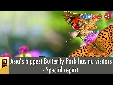 Asias-biggest-Butterfly-Park-has-no-visitors--Special-report