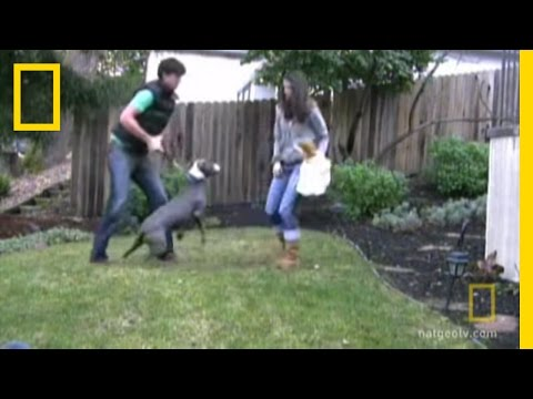 Training an Aggressive Dog