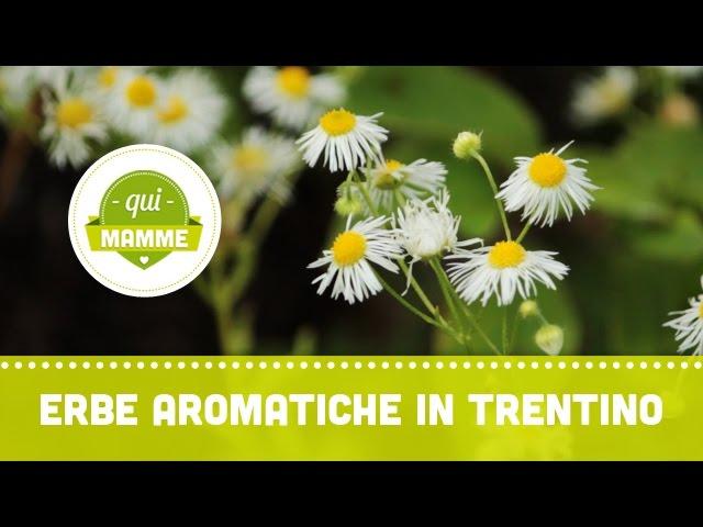 Alla scoperta delle erbe aromatiche