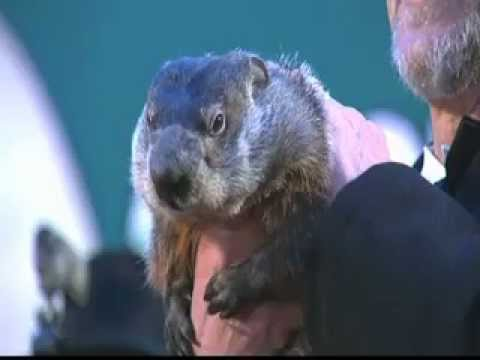 Puxatony Phil's Groundhog Day Predictions Will Reveal How Long Winter Will Be