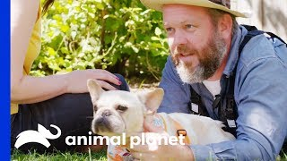 Cameraman Can't Resist Adopting This Adorable Frenchie! | Amanda To The Rescue by Animal Planet