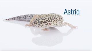 Meet our March Second Chances Calendar Star, Astrid!