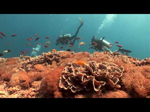 Diving in Bali - Indonesia