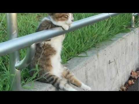 Ver.2 夕暮れの お座り猫ちゃん  / Ver.2 Cat sitting relaxed (видео)