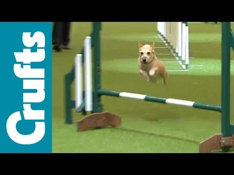 agility - Agility - Team - Small Final - Crufts 2012.