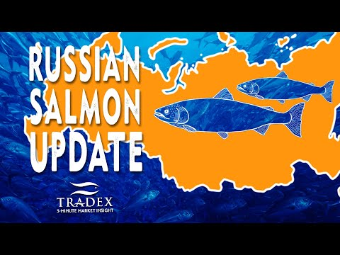 3MMI - Russian Salmon Update: 100,000MT Harvested in 1 Week, Cold Storage Shortages