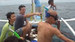 Donsol Philippines  city images : Donsol Whale Sharks, Philippines