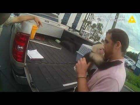 العرب اليوم - شاهد: قرد يهرب من الاعتقال بعد إلقاء القبض على صاحبه