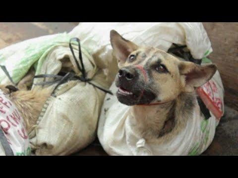 Ν. Κορέα: Κατοικίδιο και όχι έδεσμα ο σκύλος