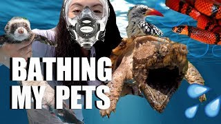 Video Bathing My Pets - How I Bathe All My Animals MP3, 3GP, MP4, WEBM, AVI, FLV Agustus 2018