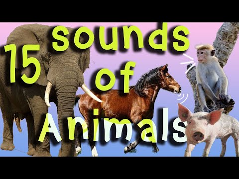 15 Animals sounds