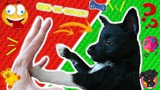 Mi PERRO Cachorro JUEGA con sus HERMANOS HUMANOS! Lana Funnydogs