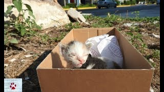 Rescue of two baby kittens left to die of hunger on the street by The Orphan Pet