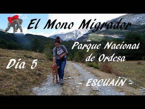 EL MONO MIGRADOR/ ESPAÑA DIA 5/ Salvamos a un TERNERO + vemos QUEBRANTAHUESOS!!