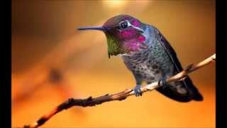 """Olivier Messiaen: """"Oiseaux Exotiques"""""""