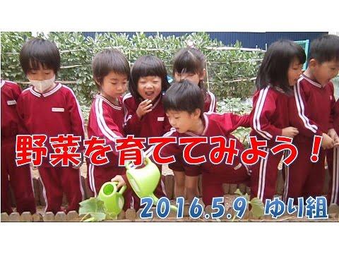 八幡保育園(福井市)動画NEWS:ゆり組(4歳児年中)野菜を育ててみよう!トマトにきゅうりになす、みんなでお世話しようね!2016年5月
