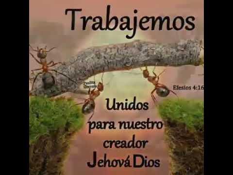 Frases bonitas para los testigos de Jehová