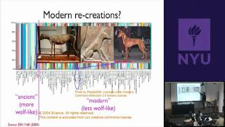 Natural Science II: Genomes And Diversity - Breed Discrimination&Genotypes And Phenotypes