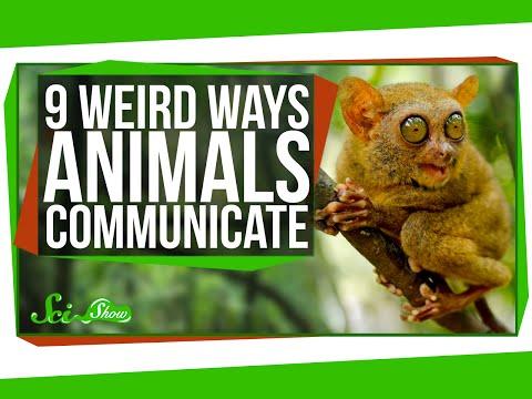 9 Weird Ways Animals Communicate