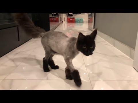 Vợ chồng Trấn Thành Hariwon mệt mỏi vì sự chảnh chó của con mèo Trấn Xì. - Thời lượng: 2:41.