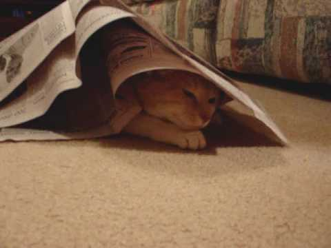 Cat Hides Under Newspaper
