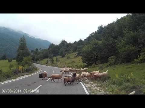 Когда решил пасти овец на повышенном уровне сложности