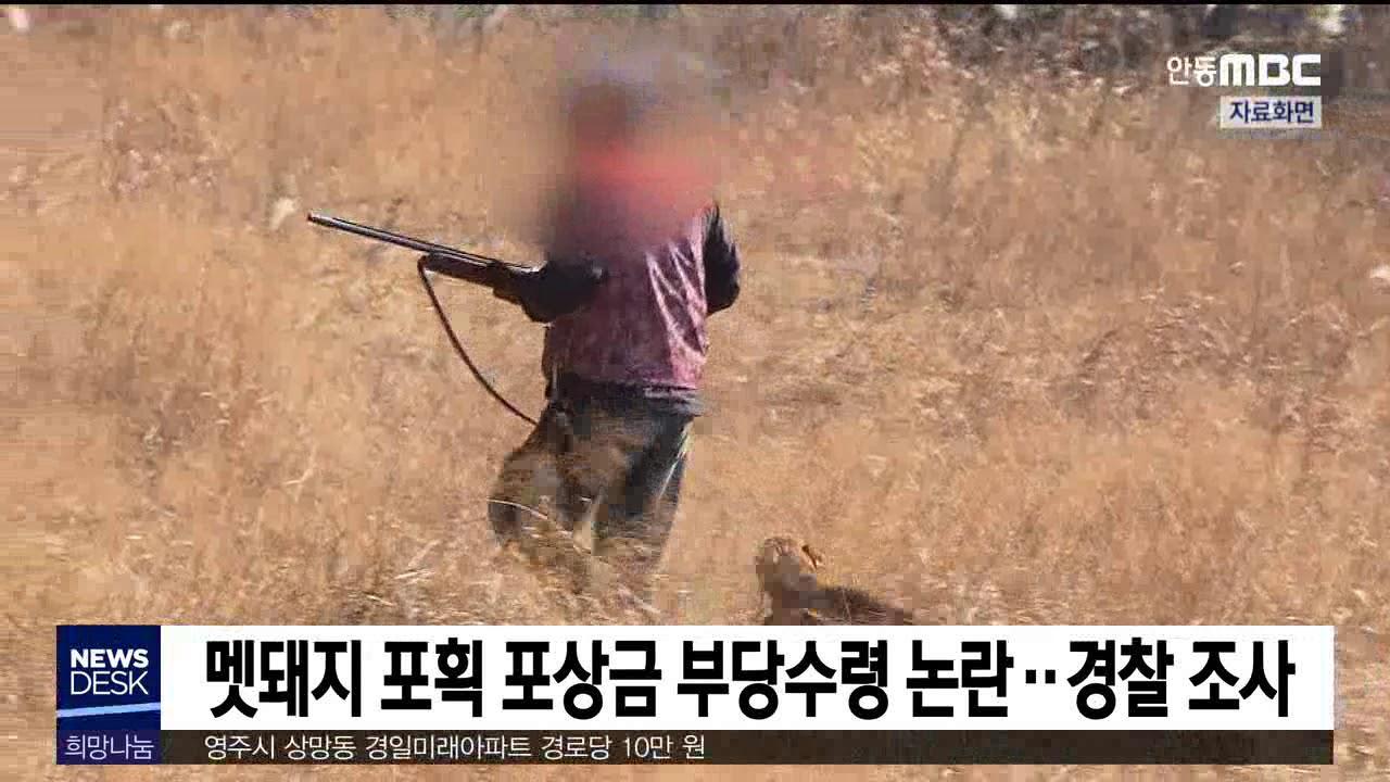 멧돼지 포획 포상금 부당수령 논란..경찰 조사